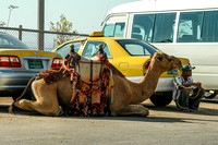 Conveyances for hire near the Dead Sea, Jordan