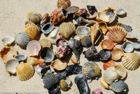 Shells from the Gulf of Mexico